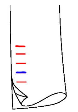 0923 - Drittes Knopfloch farbig